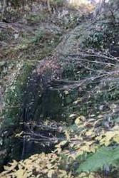 カラ滝 - 1 (1).jpeg