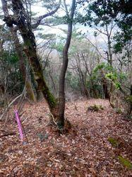 佐摩山からの下り.jpg