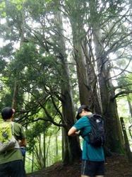 六本杉.jpg