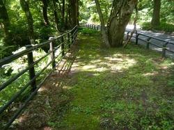 木質チップの歩道.jpg