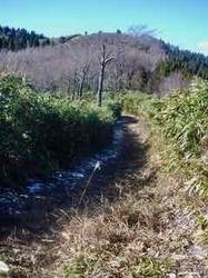 本谷登山道4 - 1.jpeg