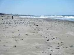 砂浜 - 1.jpeg
