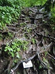 網の目のような木の根.jpg