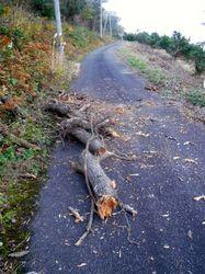 道路を塞ぐ倒木.jpg