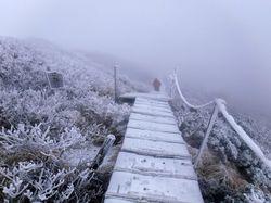雪の木道.jpg