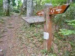 鷲峰コースへの分岐 - 1.jpeg